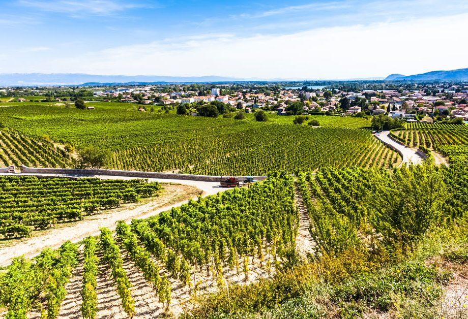 Domaine viticole de tain l'Hermitage en Ardèche
